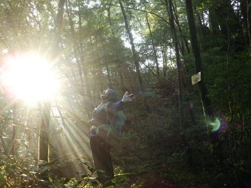 光の森を歩く_b0160957_1227178.jpg