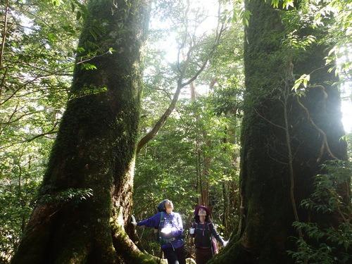 光の森を歩く_b0160957_12281366.jpg