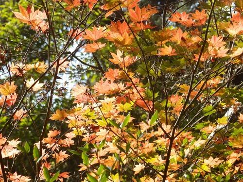 光の森を歩く_b0160957_1229548.jpg