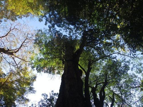 光の森を歩く_b0160957_12295671.jpg