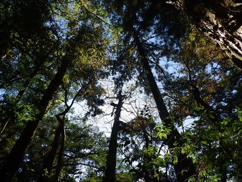 光の森を歩く_b0160957_12303141.jpg