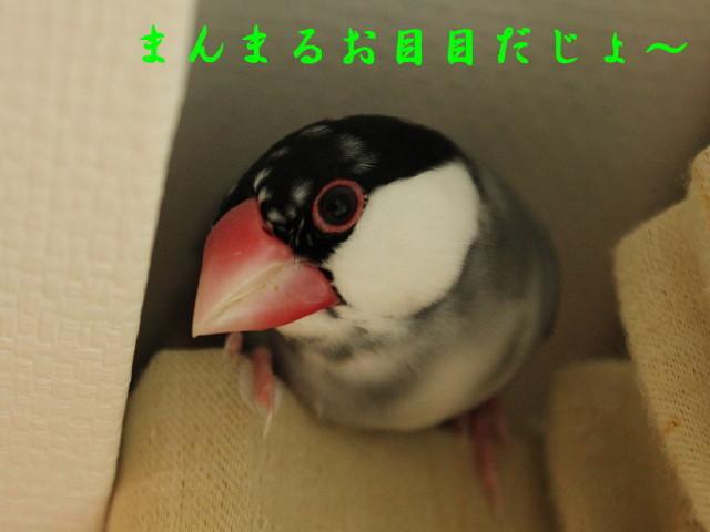 c0365734_19134114.jpg