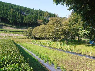 『水源キウイ』令和元年度も完売御礼!来年も無農薬、無化学肥料で大事に栽培していきます。キウイの落葉_a0254656_1837723.jpg