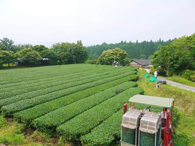 『水源キウイ』令和元年度も完売御礼!来年も無農薬、無化学肥料で大事に栽培していきます。キウイの落葉_a0254656_18393140.jpg