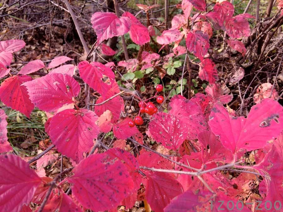 赤い実、赤い葉_c0223095_21271345.jpg