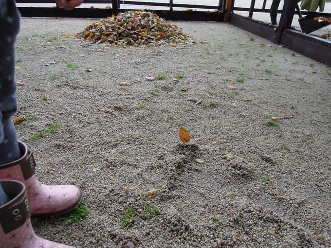 くすかき、雨の初日_f0048597_6321071.jpg