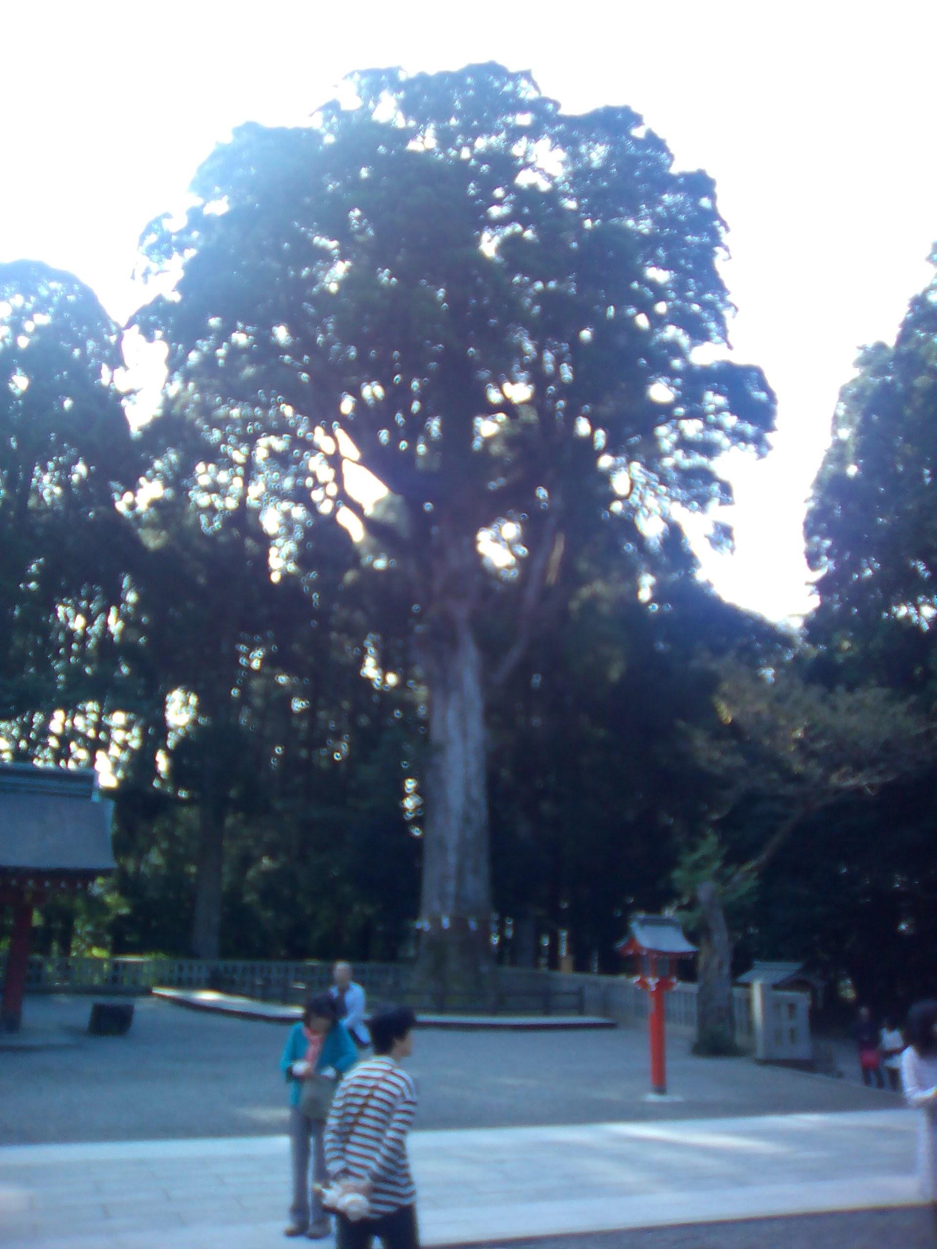 in九州_b0246398_12412940.jpg