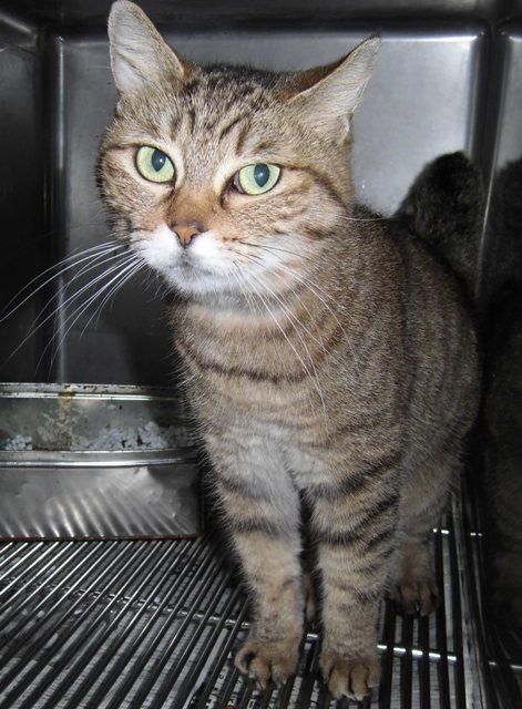 【移動先募集】センター(支所)収容の猫たち_f0242002_11501135.jpg