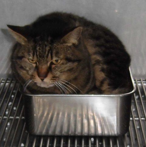 【移動先募集】センター(支所)収容の猫たち_f0242002_11543191.jpg