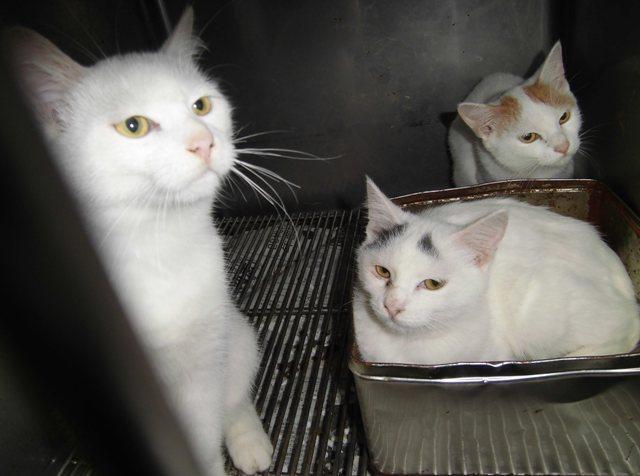 【移動先募集】センター(支所)収容の猫たち_f0242002_13132878.jpg