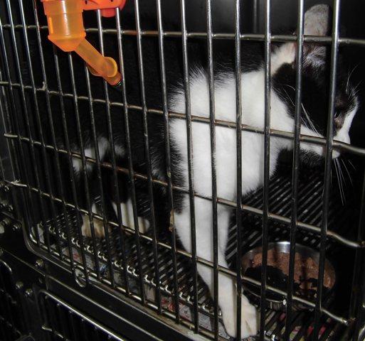 【移動先募集】センター(支所)収容の猫たち_f0242002_1361186.jpg