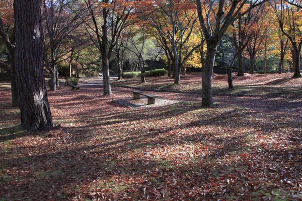深まる秋の雑木林_e0048413_21354132.jpg