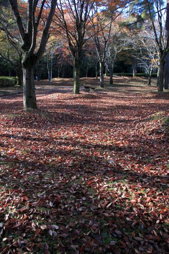 深まる秋の雑木林_e0048413_21355040.jpg