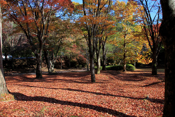 深まる秋の雑木林_e0048413_21361439.jpg