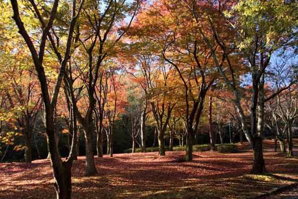 深まる秋の雑木林_e0048413_2136168.jpg