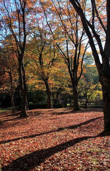 深まる秋の雑木林_e0048413_21362688.jpg