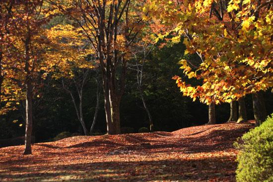 深まる秋の雑木林_e0048413_21363970.jpg
