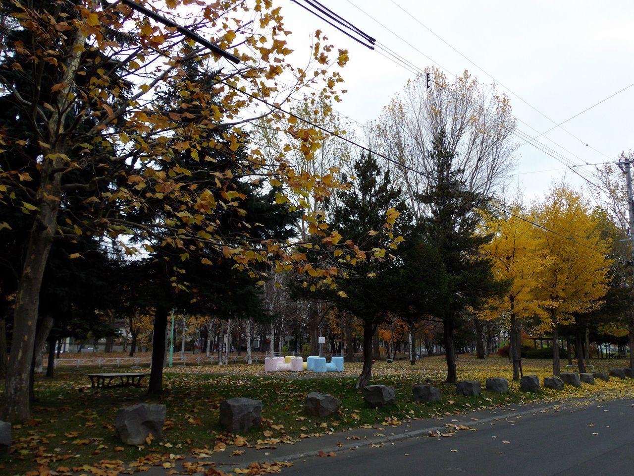 いよいよ冬への曲がり角_c0025115_19081833.jpg