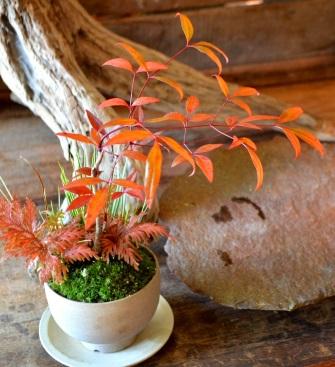 秋冬の盆栽が届きました_d0263815_16162322.jpg