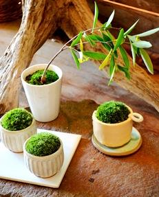 秋冬の盆栽が届きました_d0263815_16213966.jpg