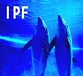 IPF患者における急速な肺活量の低下は急性増悪のリスク_e0156318_13274932.jpg