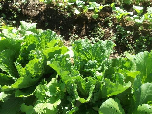 野菜の収穫...晴れて来たので_b0137932_18171127.jpg