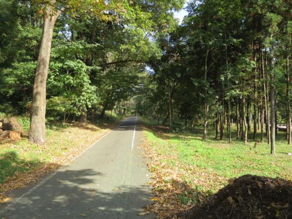 自転車道を歩く_c0001670_20291645.jpg