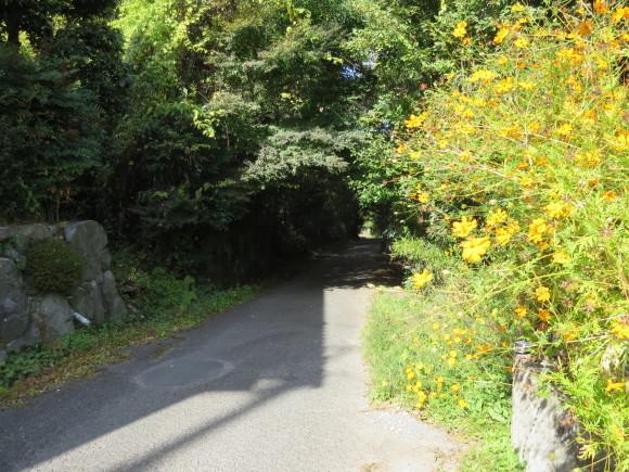 自転車道を歩く_c0001670_20293182.jpg