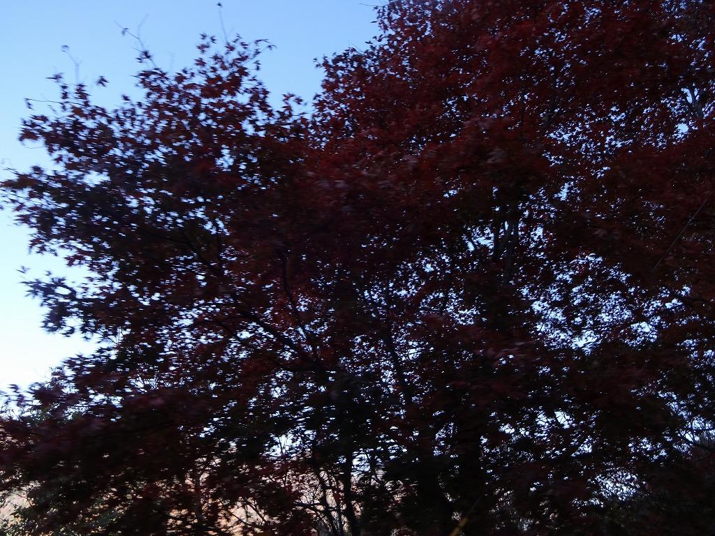 新潟五泉市、月岡温泉~磐梯山と那須の紅葉【11/4_5】_d0061678_17264644.jpg