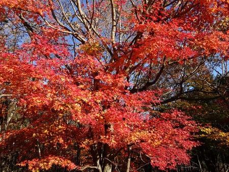 新潟五泉市、月岡温泉~磐梯山と那須の紅葉【11/4_5】_d0061678_1727446.jpg