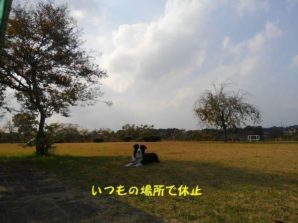 d0224111_17453698.jpg