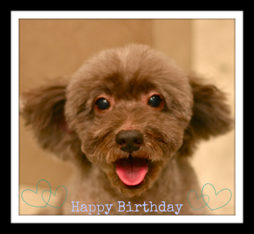 Happy Birthday♡ヴィヴィットくん_d0060413_1294976.jpg