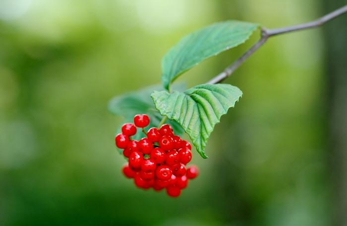 赤い実が多いのは何故でしょう_f0012718_0542882.jpg