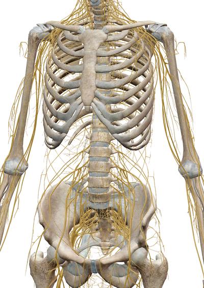 原因が分かる腰痛、分からない腰痛ってあるの? 〜ある日の施術より〜_e0073240_064020.jpg