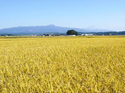 平成27年度新米!熊本の美味しいお米(七城米、砂田のれんげ米、菊池水源棚田米)好評発売中! _a0254656_1658078.jpg