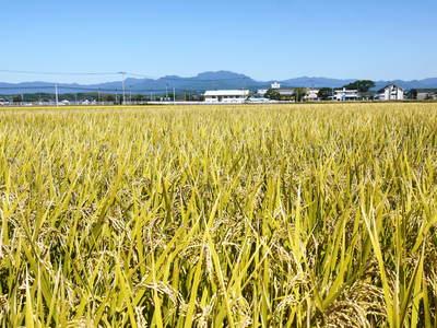 平成27年度新米!熊本の美味しいお米(七城米、砂田のれんげ米、菊池水源棚田米)好評発売中! _a0254656_1784530.jpg