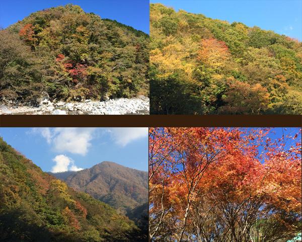 紅葉が綺麗でちた!!_c0110361_14465784.jpg