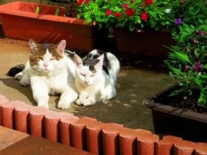 猫がこすりつけてくる時_f0325471_21183128.jpg