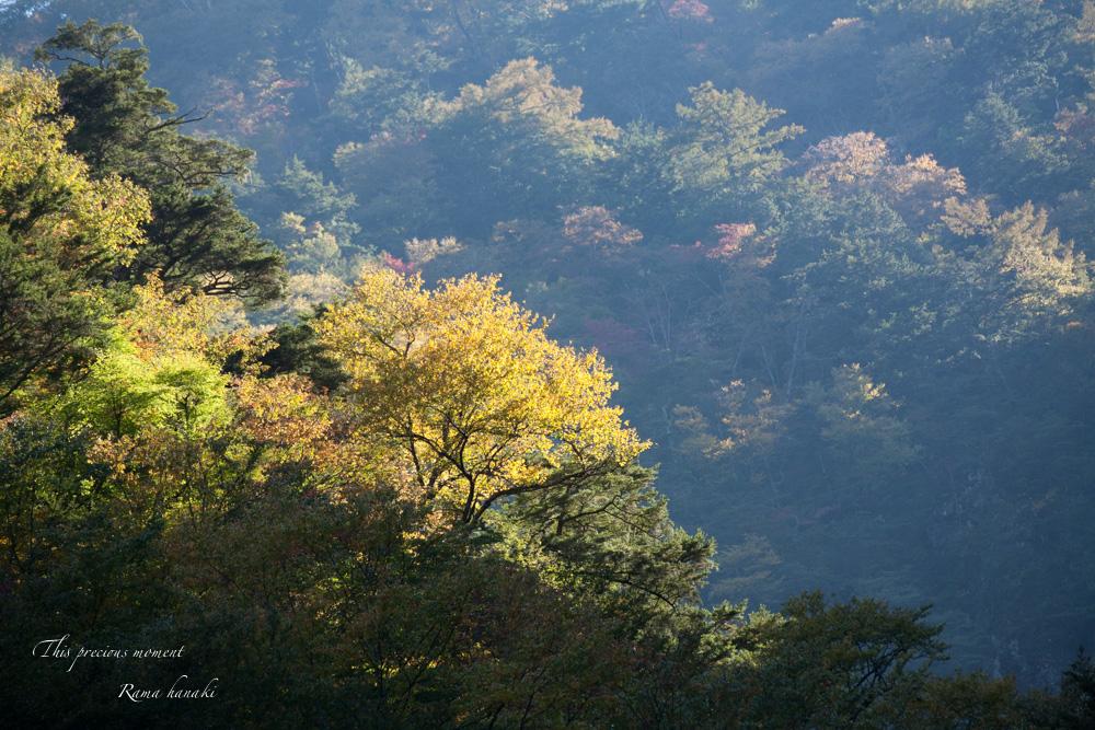 10月半ばの精進ヶ滝_c0137403_14353156.jpg