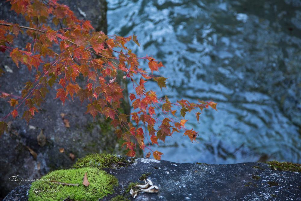 10月半ばの精進ヶ滝_c0137403_14393897.jpg