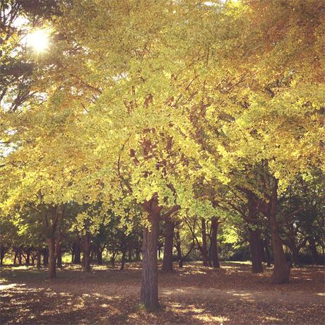 深まる秋と、映画のことなど。_d0174704_12422624.jpg