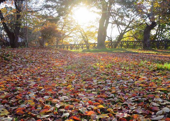 紅葉・黄葉最終章 夕陽の公園散策 Ⅰ_a0214206_10591943.jpg