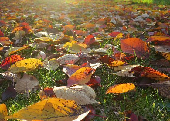 紅葉・黄葉最終章 夕陽の公園散策 Ⅰ_a0214206_10592835.jpg