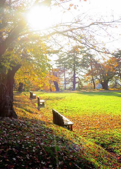 紅葉・黄葉最終章 夕陽の公園散策 Ⅰ_a0214206_11000476.jpg