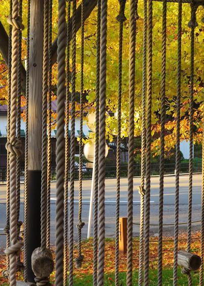 紅葉・黄葉最終章 夕陽の公園散策 Ⅰ_a0214206_11050033.jpg
