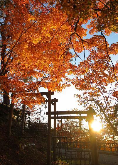 紅葉・黄葉最終章 夕陽の公園散策 Ⅰ_a0214206_11052018.jpg