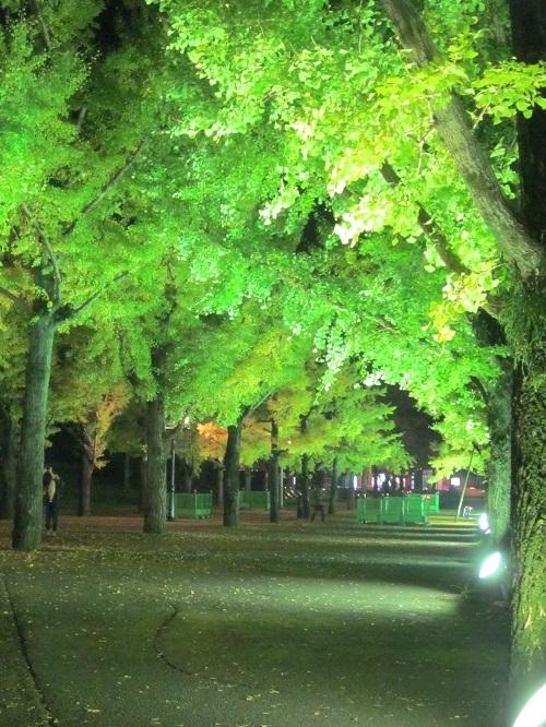 熊本県庁のライトアップ_b0228113_13191223.jpg
