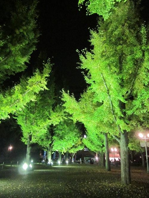 熊本県庁のライトアップ_b0228113_13271056.jpg