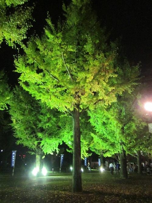 熊本県庁のライトアップ_b0228113_13280333.jpg
