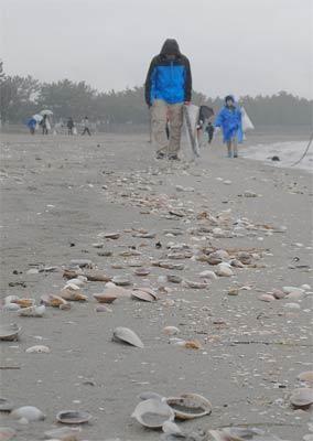 東三河海岸漂着物学習セミナー・2_c0019338_22301375.jpg